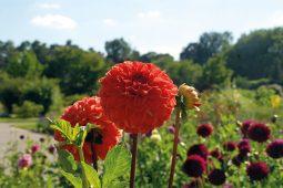0920BotGarten_2, Botanischer Garten